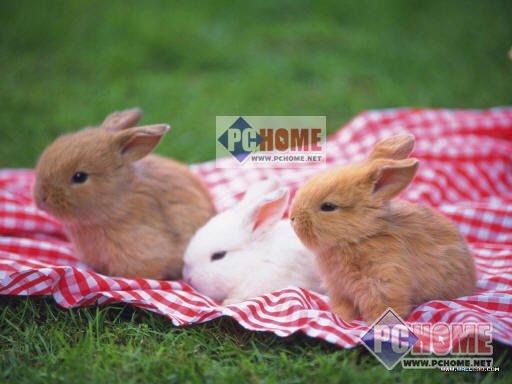 可爱兔子壁纸