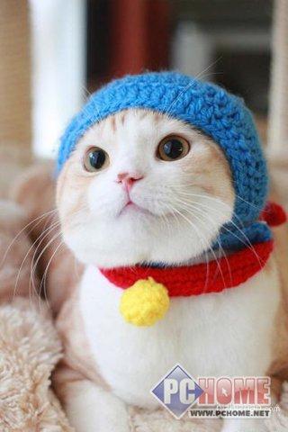 下载中心 壁纸 手机壁纸 动物植物 搞怪猫咪高清手机壁纸 > 图片