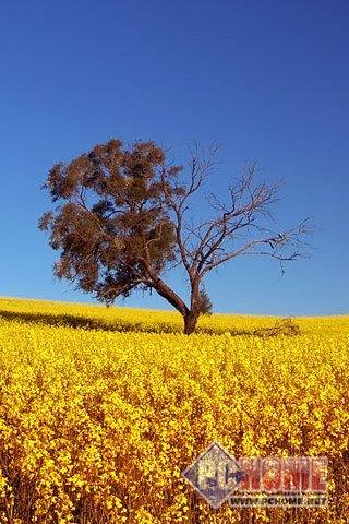 清新自然风景手机壁纸官方免费下载_清新自然风景手机